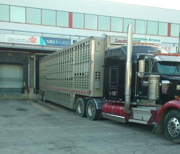 trans world cattle 2